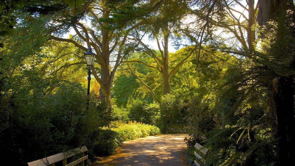 Mona Vale que incluye un parque