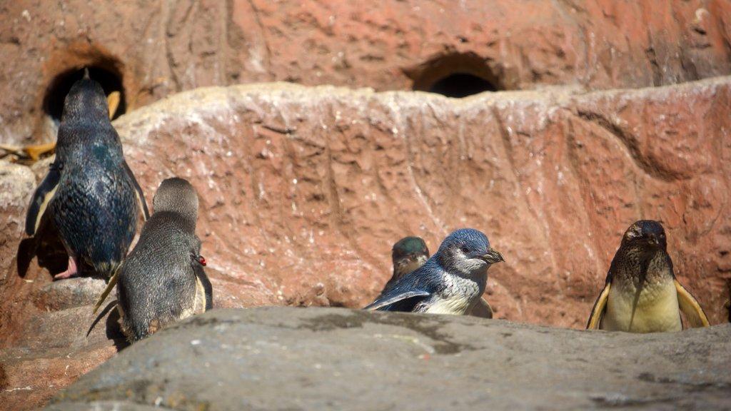 International Antarctic Centre mostrando animales del zoológico y vida de las aves