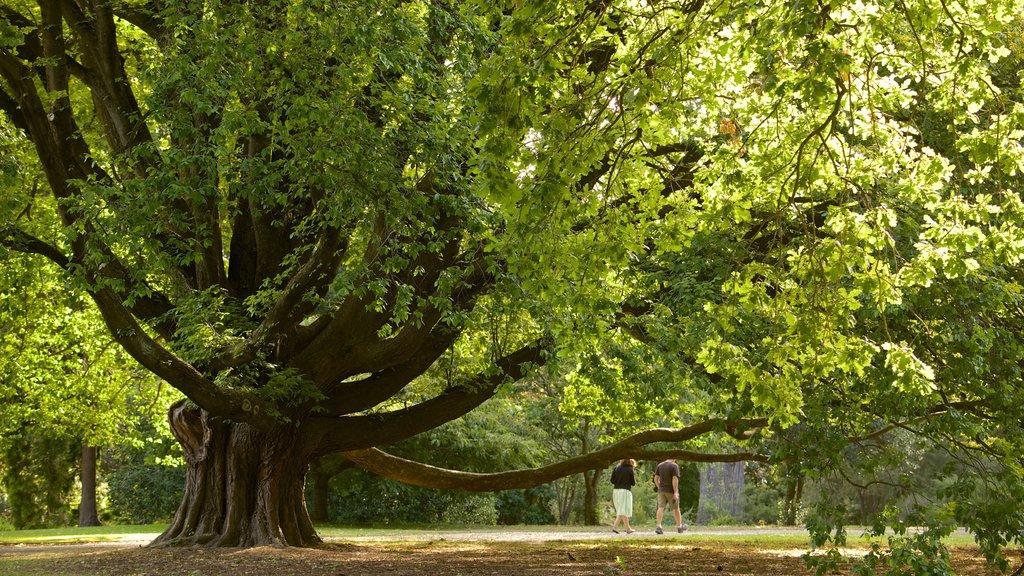 Christchurch Botanic Gardens featuring a garden