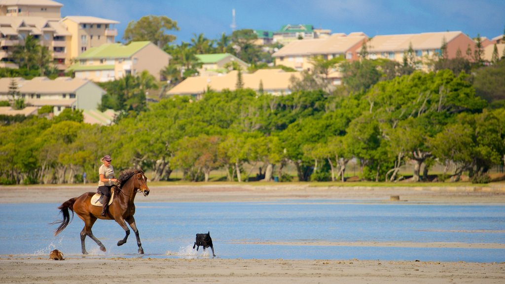 Noumea featuring a sandy beach and cuddly or friendly animals as well as an individual femail