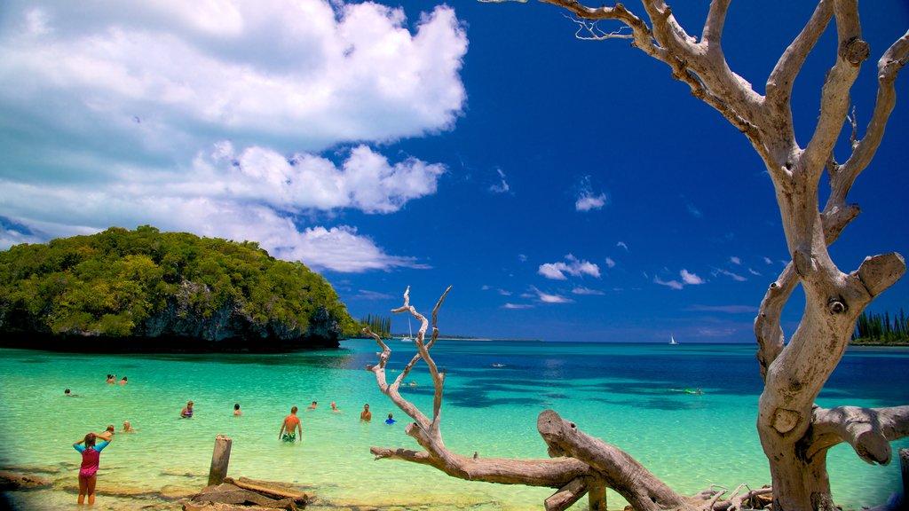 Kanumera Beach showing general coastal views
