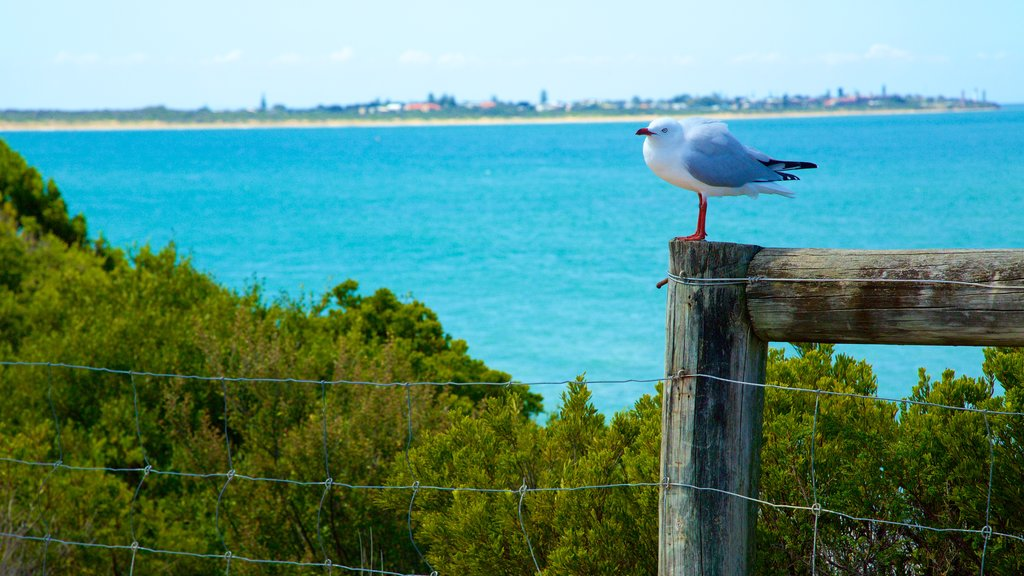 Point Lonsdale which includes general coastal views and bird life