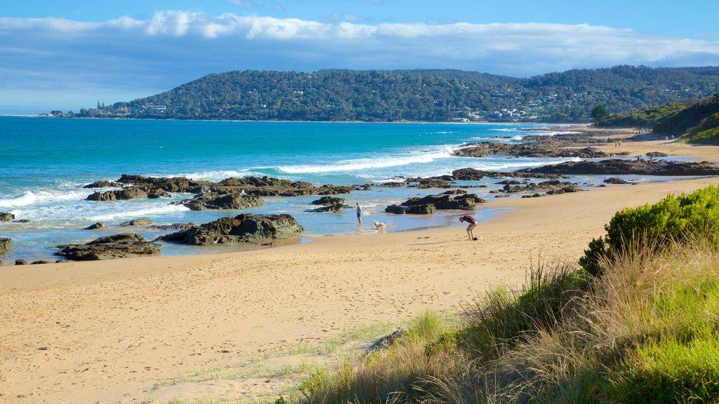 Lorne featuring rugged coastline