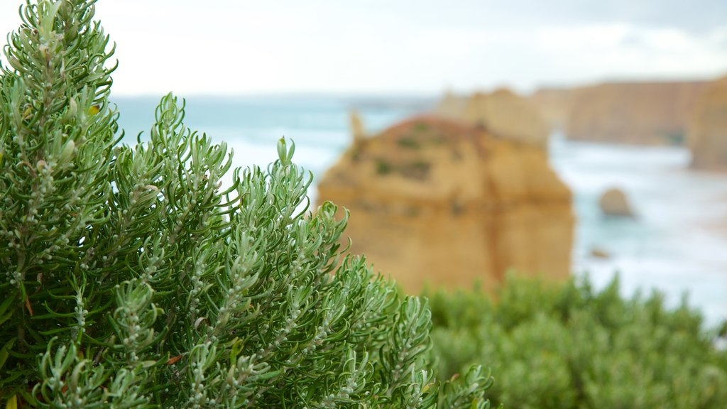 Twelve Apostles which includes general coastal views
