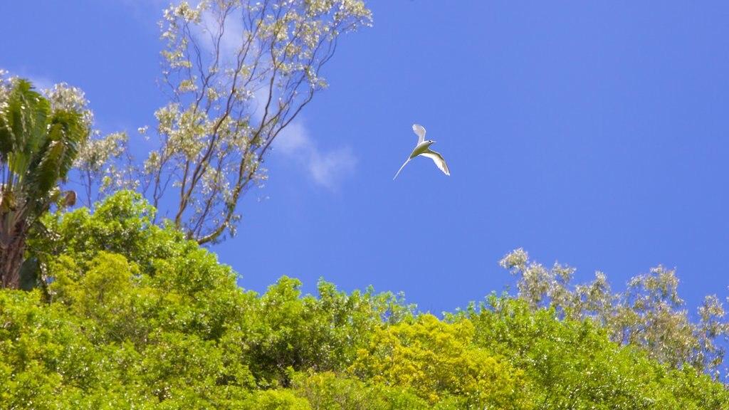 Tamarind Falls showing bird life