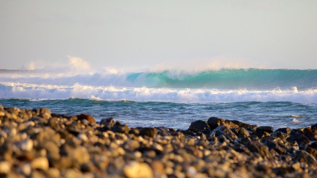 Reunion showing waves and a pebble beach