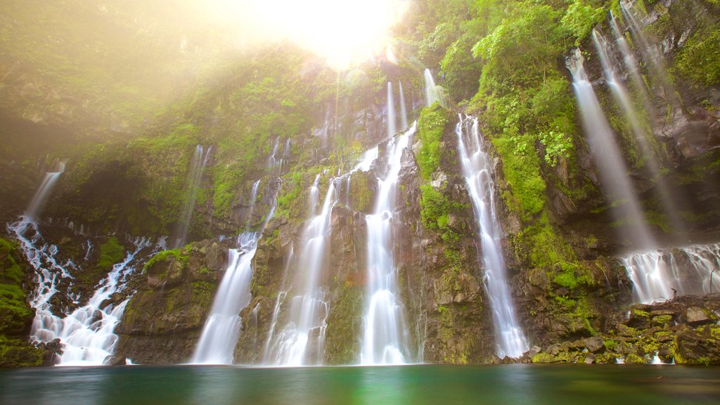 Reunion featuring a lake or waterhole, rainforest and a cascade