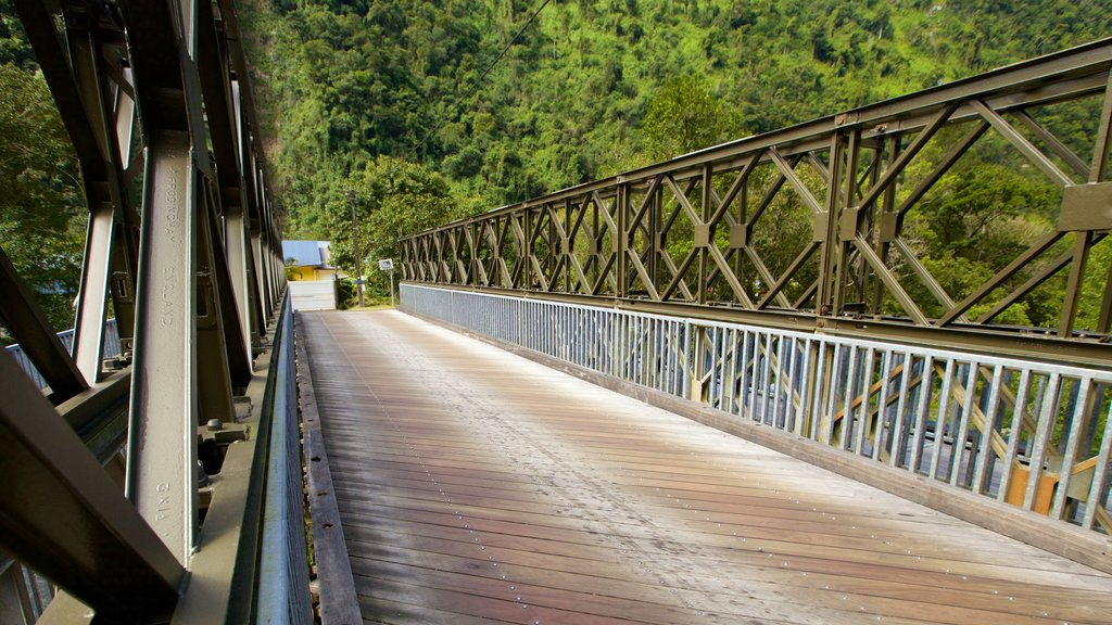 Reunion which includes a bridge and rainforest