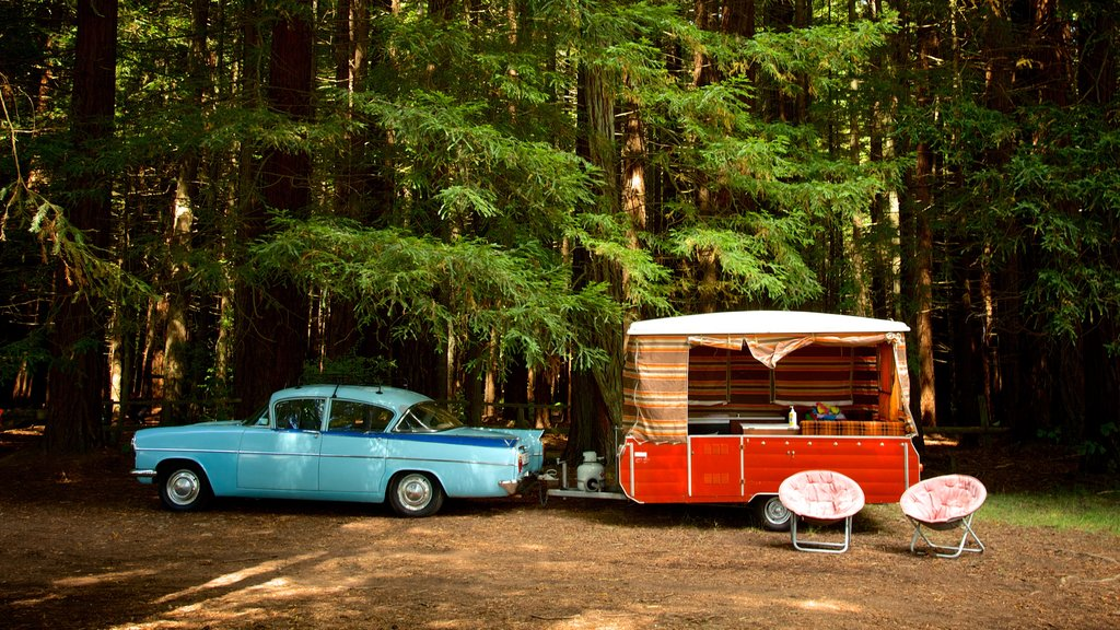 Redwoods Whakarewarewa Forest featuring touring and forests