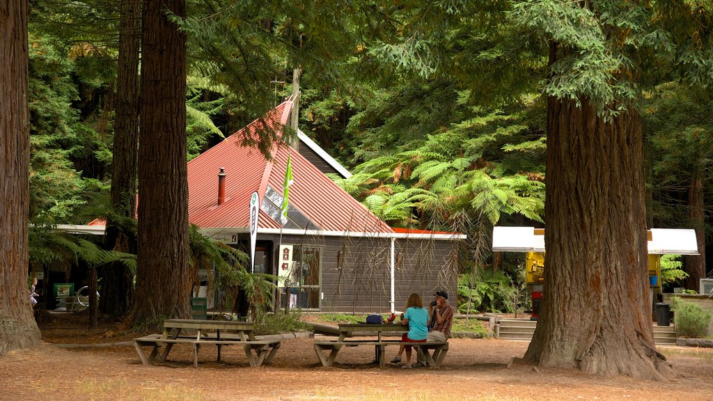Redwoods Whakarewarewa Forest which includes a garden as well as a small group of people