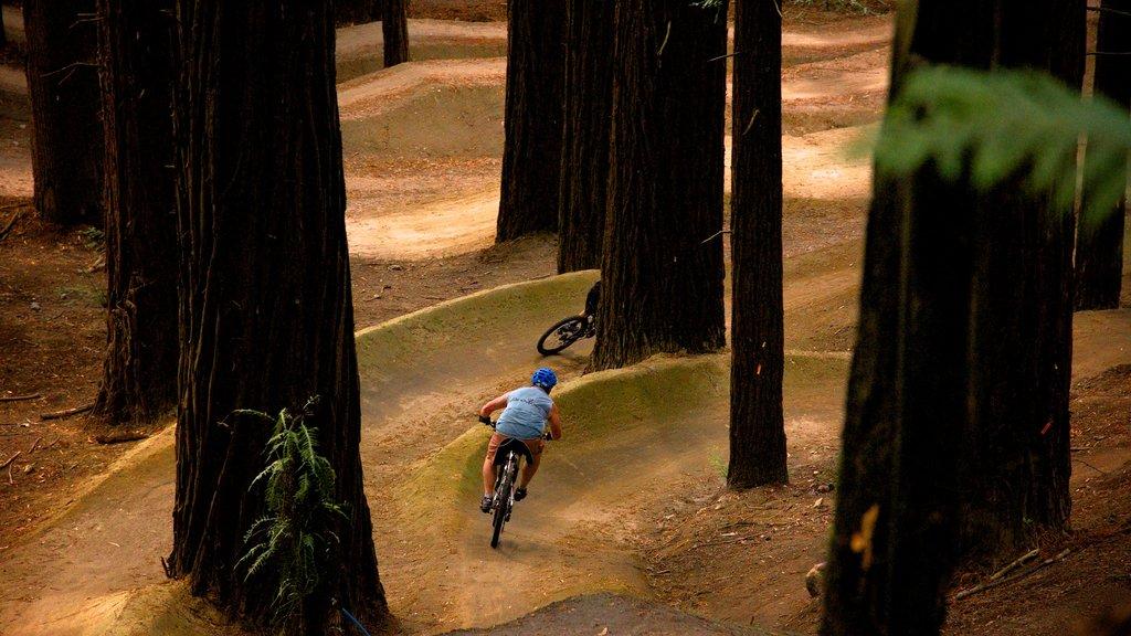 Redwoods Whakarewarewa Forest mostrando ciclismo de montaña y escenas forestales