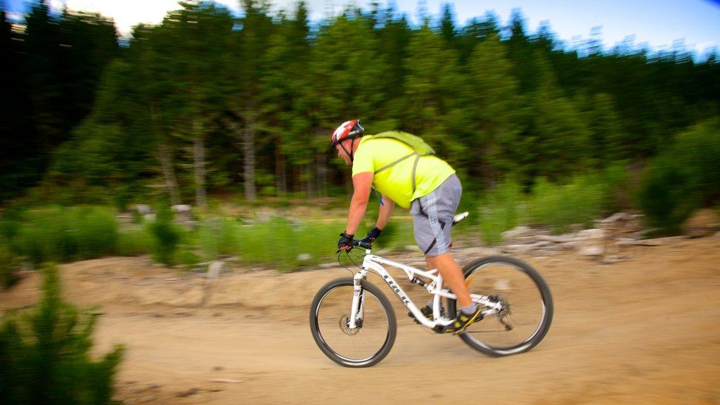 Redwoods Whakarewarewa Forest que incluye ciclismo de montaña y también un hombre