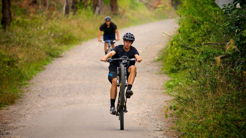 Redwoods Whakarewarewa Forest ofreciendo ciclismo de montaña y también un hombre