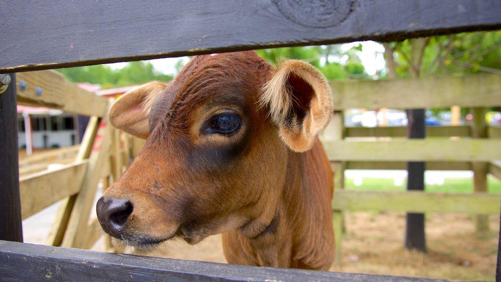 Agrodome ofreciendo animales