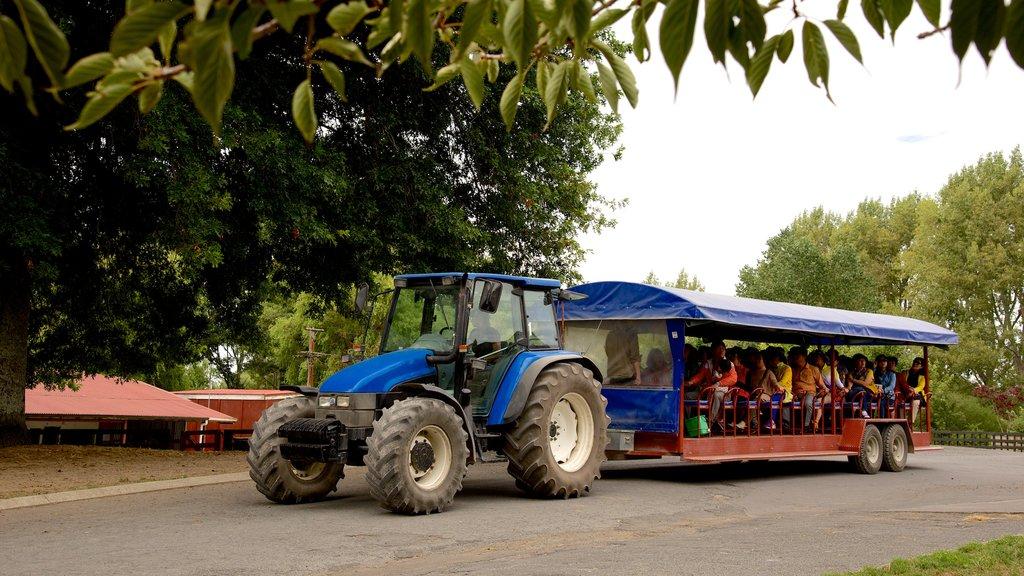 Agrodome ofreciendo turismo en vehículo