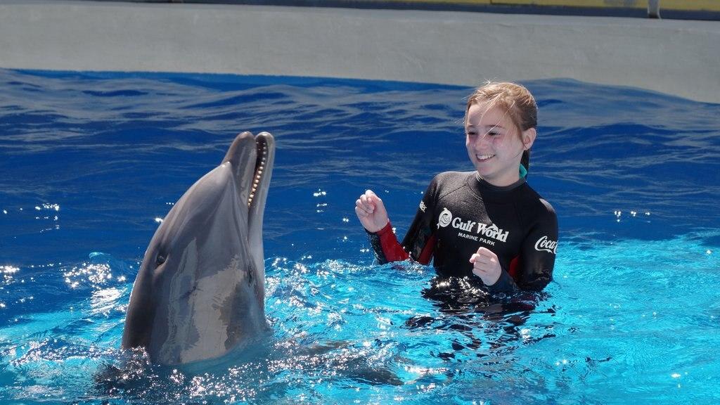 Gulf World Marine Park que inclui esportes aquáticos e vida marinha assim como uma criança sozinha