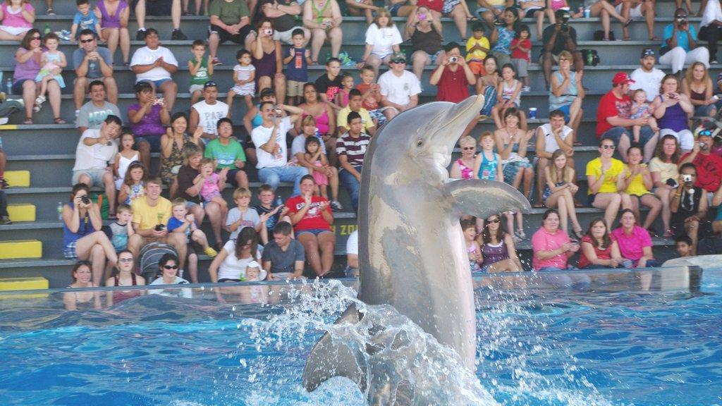 Gulf World Marine Park mostrando vida marinha e arte performática assim como um grande grupo de pessoas
