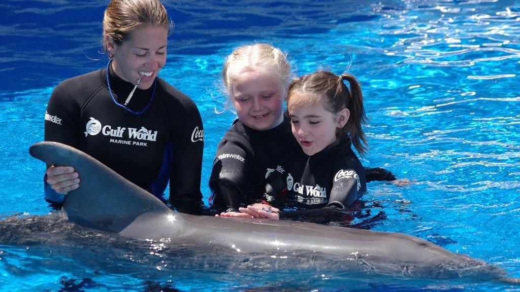 Gulf World Marine Park que inclui vida marinha assim como um pequeno grupo de pessoas