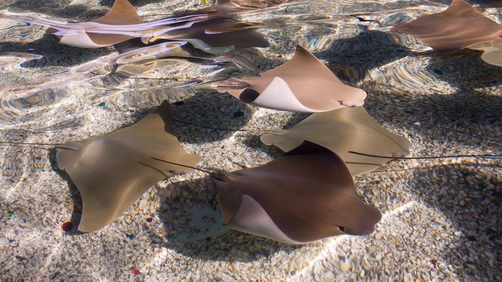 Gulf World Marine Park que inclui vida marinha