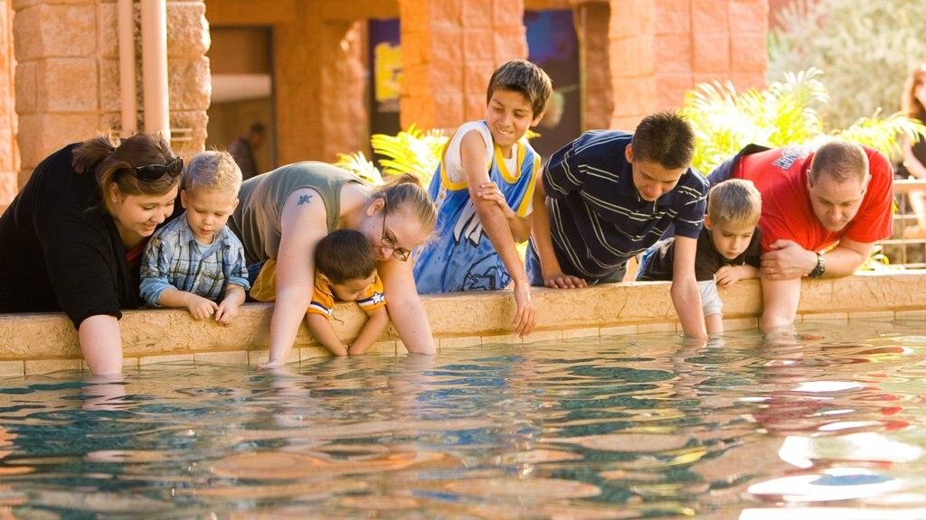 Gulf World Marine Park assim como um pequeno grupo de pessoas