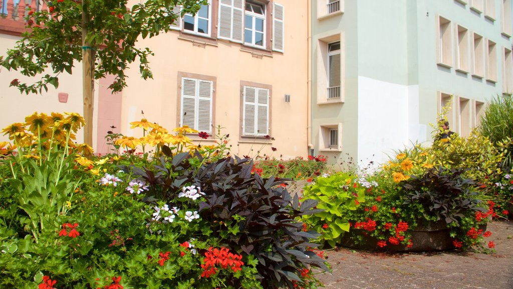 Colmar featuring flowers