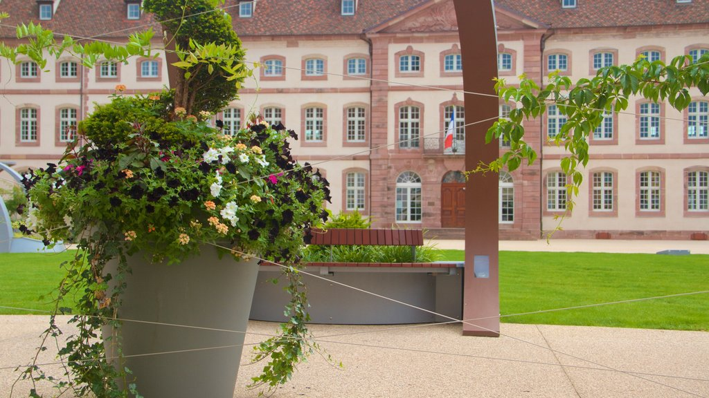 Colmar showing flowers, heritage elements and a park