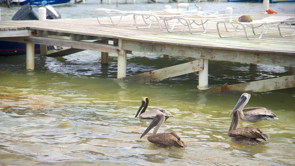 San Pedro featuring bird life