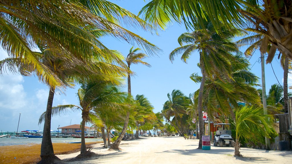 San Pedro which includes general coastal views and tropical scenes