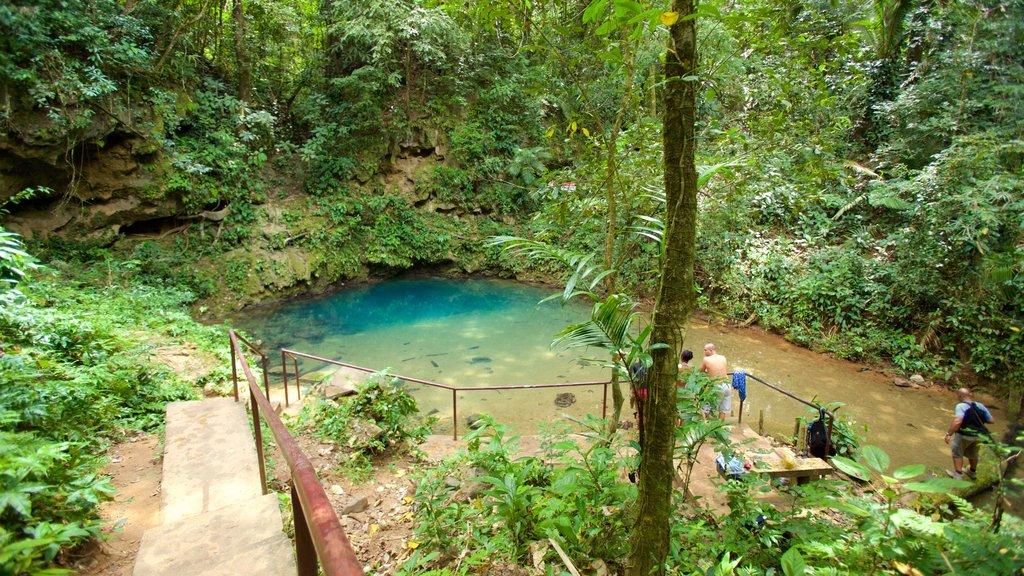 Parque Nacional Blue Hole que incluye un lago o abrevadero y selva