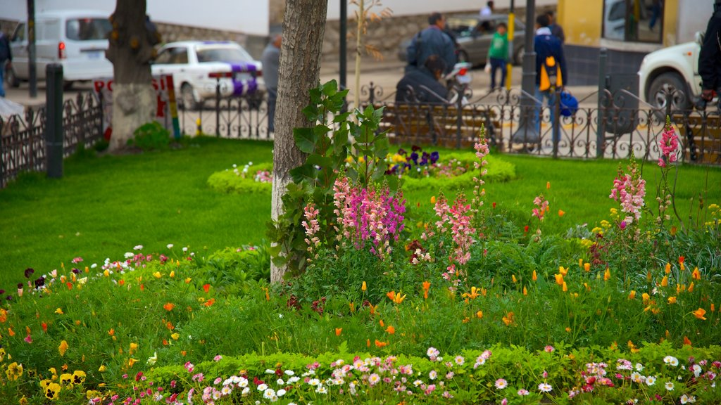 Potosi featuring a park