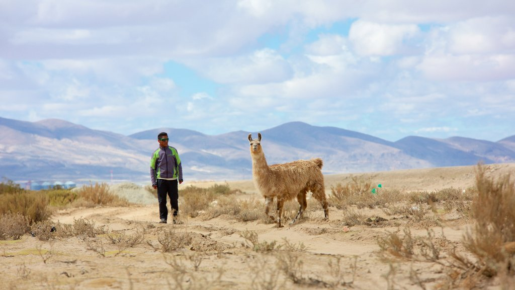 Uyuni which includes cuddly or friendly animals and tranquil scenes as well as an individual male