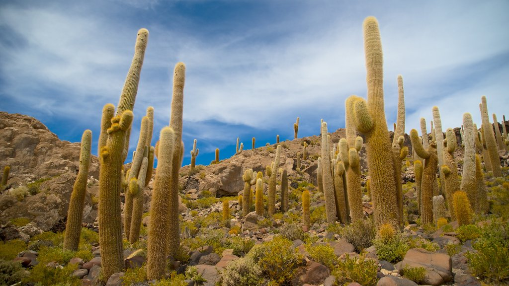 Salar de Uyuni which includes tranquil scenes
