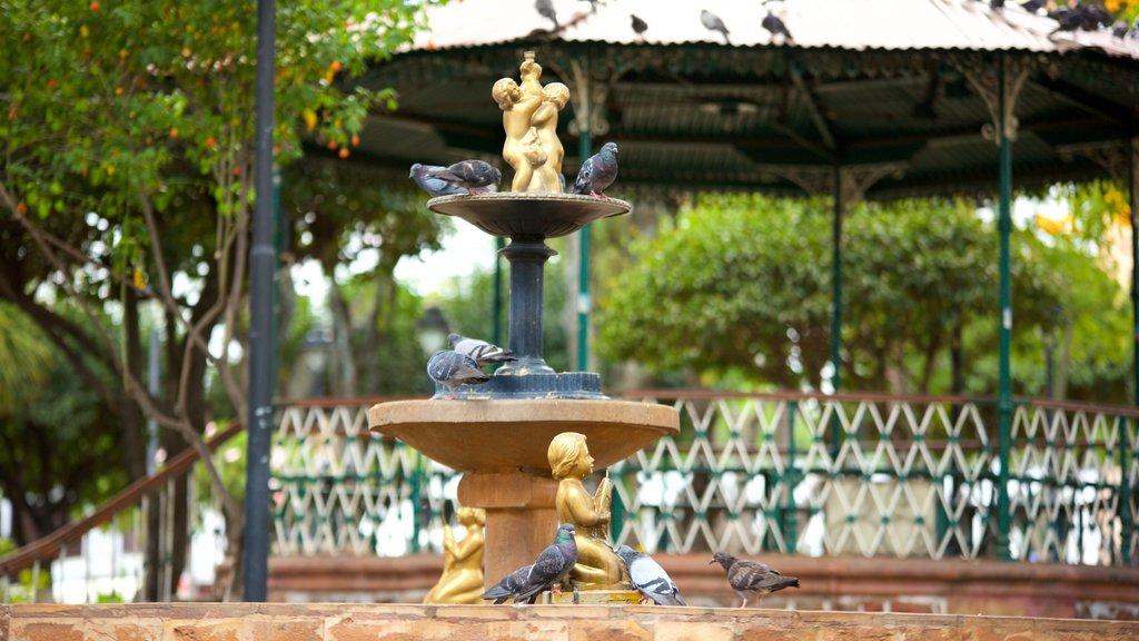 Plaza de 25 de Mayo featuring a fountain