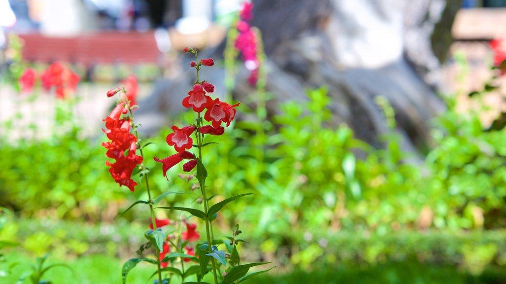 Plaza de 25 de Mayo which includes flowers