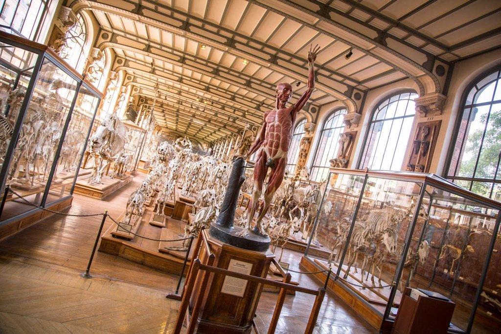 Galeries d'Anatomie & de Paléontologie - Museum National d'Histoire Naturelle - 75005 Paris.jpg