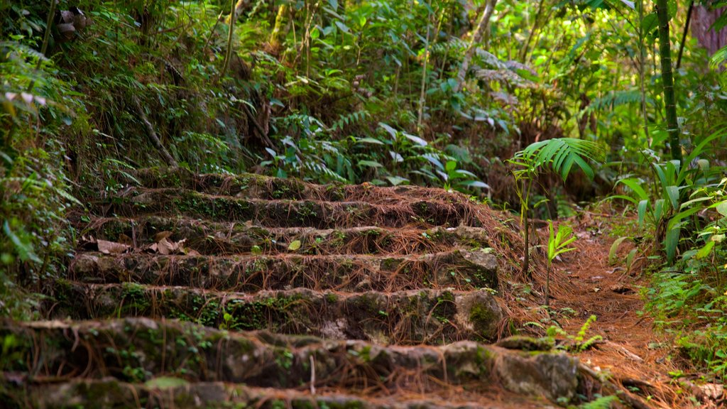Las Victorias National Park which includes rainforest