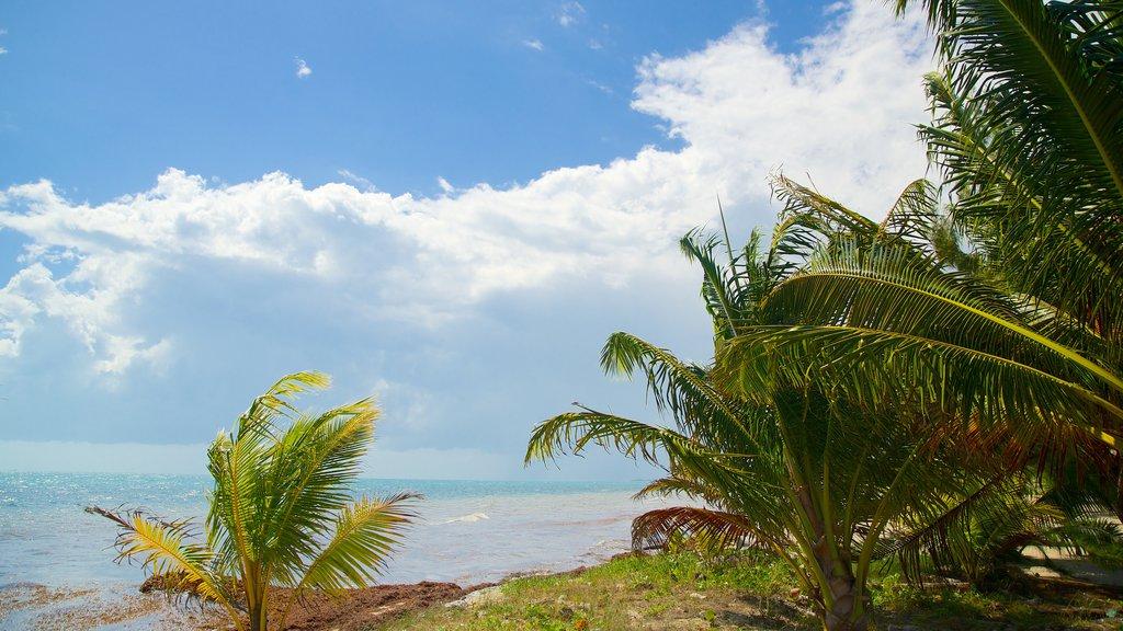 Maya Beach featuring general coastal views and tropical scenes