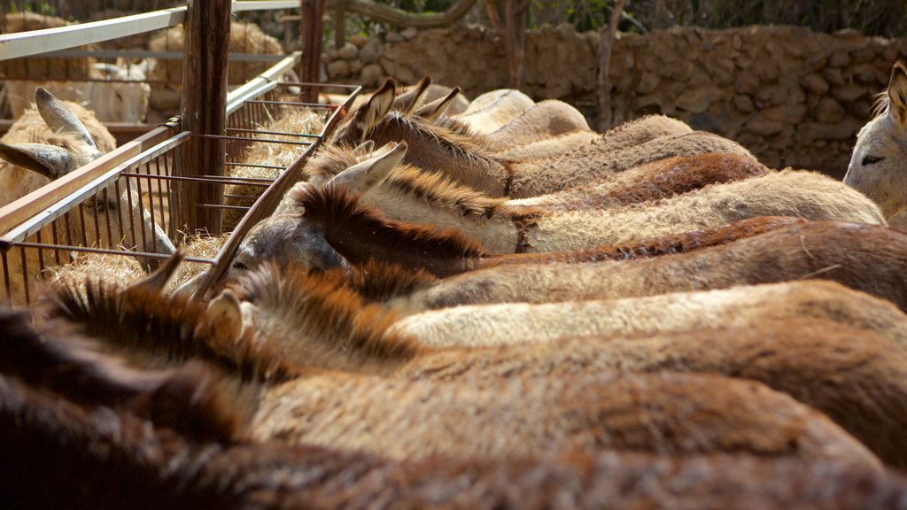 Santa Cruz ofreciendo animales del zoológico y animales