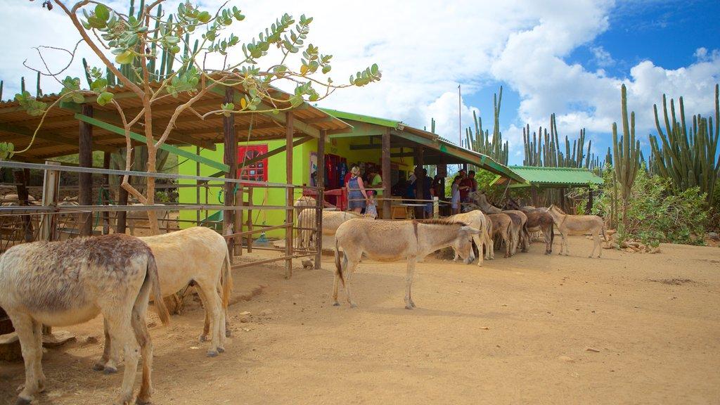 Santuario de burros ofreciendo animales y animales del zoológico
