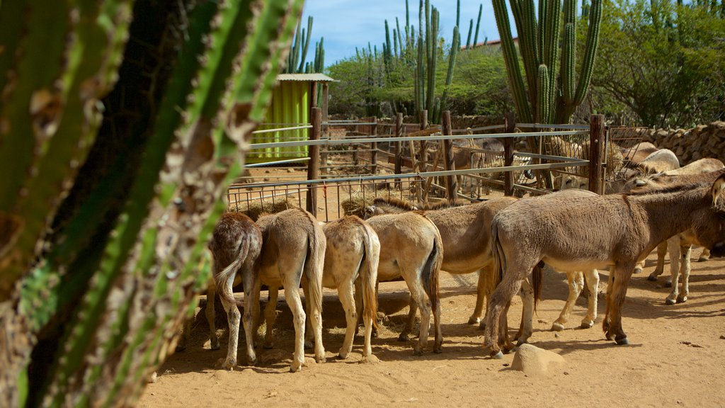 Santuario de burros ofreciendo animales del zoológico y animales