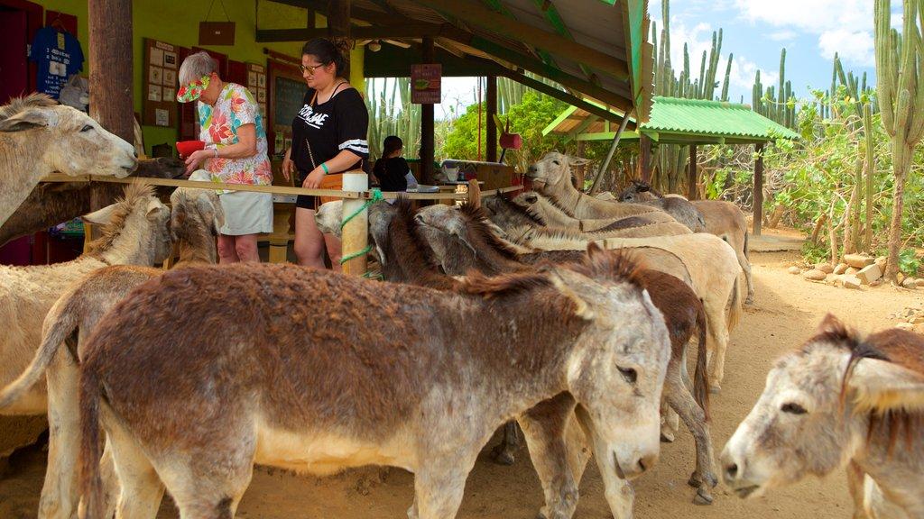 Santuario de burros que incluye animales y animales del zoológico y también un pequeño grupo de personas