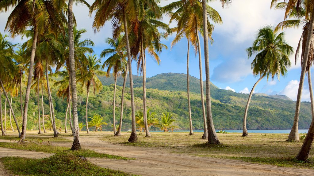 Rincon Beach which includes general coastal views and tropical scenes