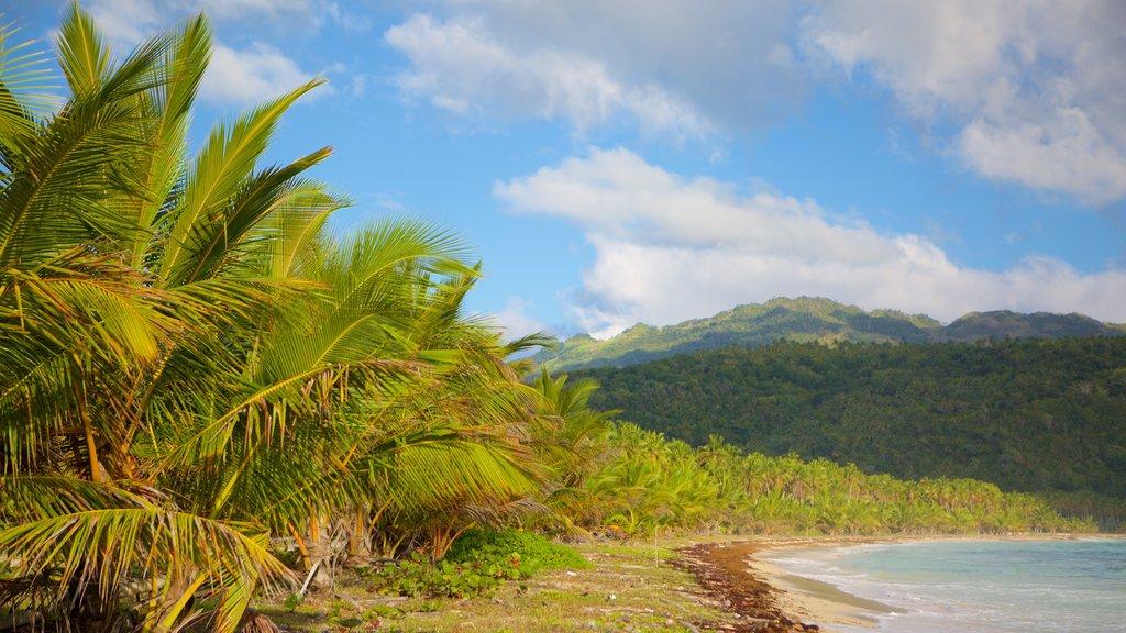 Rincon Beach showing general coastal views