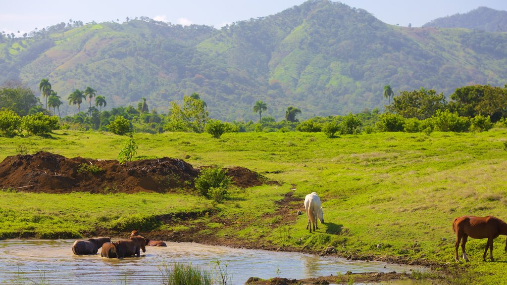 Higuey featuring tranquil scenes, animals and a pond