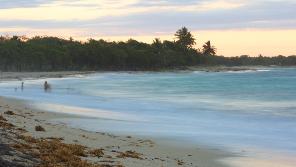 Playa Dorada which includes a beach and a sunset