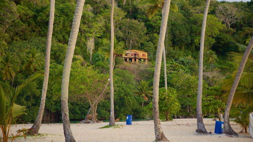 Rincon Beach showing a beach and tropical scenes