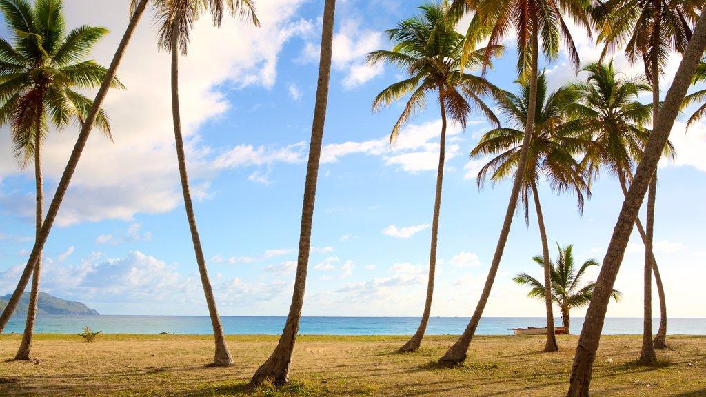 Rincon Beach featuring tropical scenes and a sandy beach