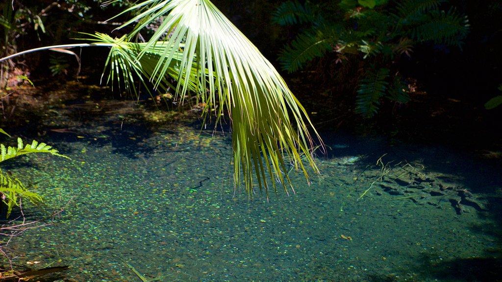 Parque Ecológico Ojos Indígenas ofreciendo un parque y un río o arroyo