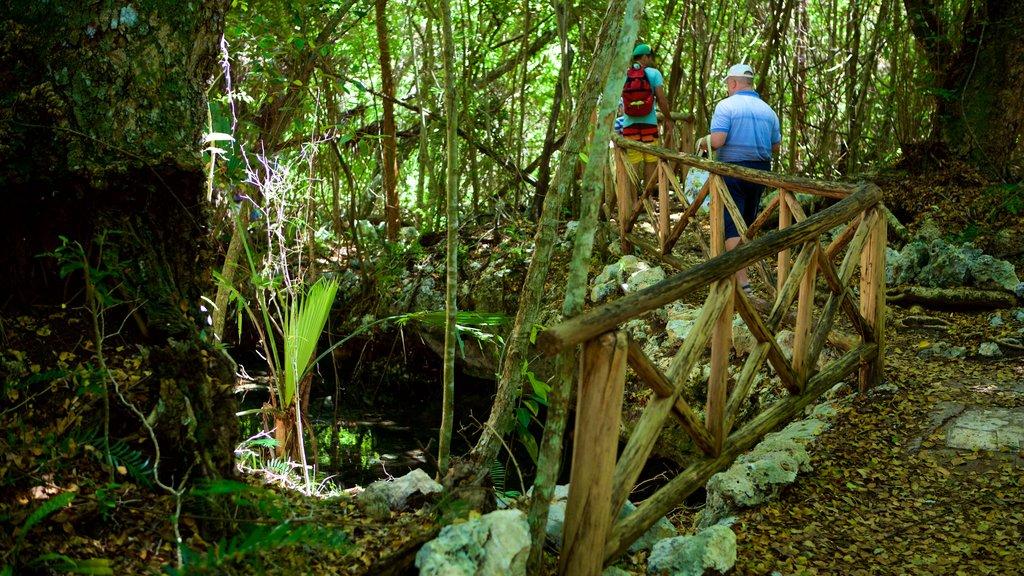 Parque Ecológico Ojos Indígenas mostrando un jardín y también un pequeño grupo de personas