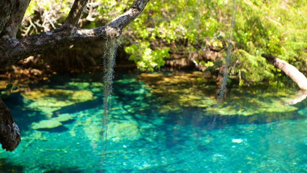 Parque Ecológico Ojos Indígenas que incluye un lago o abrevadero y un parque